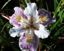 Lavender SprayIMG_4225